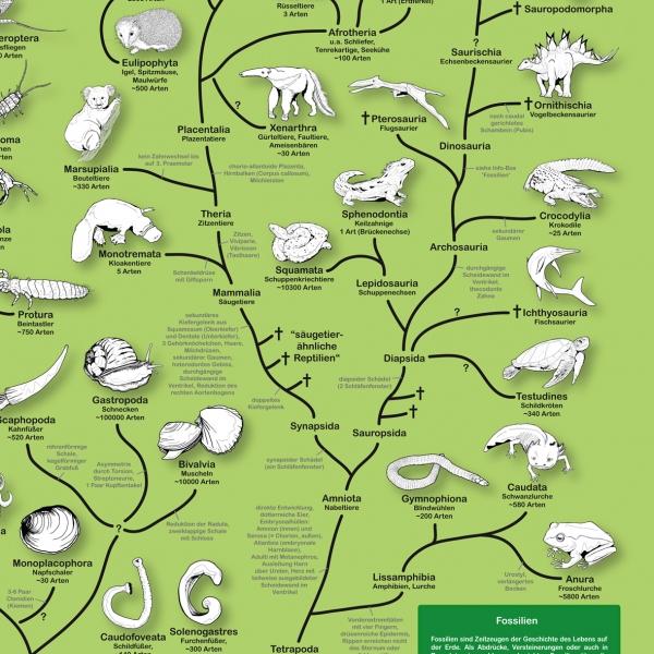 Stammbaum Der Tiere